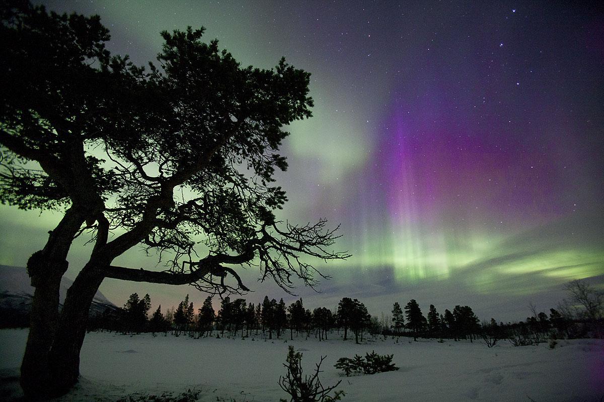 Aurora_Abisko