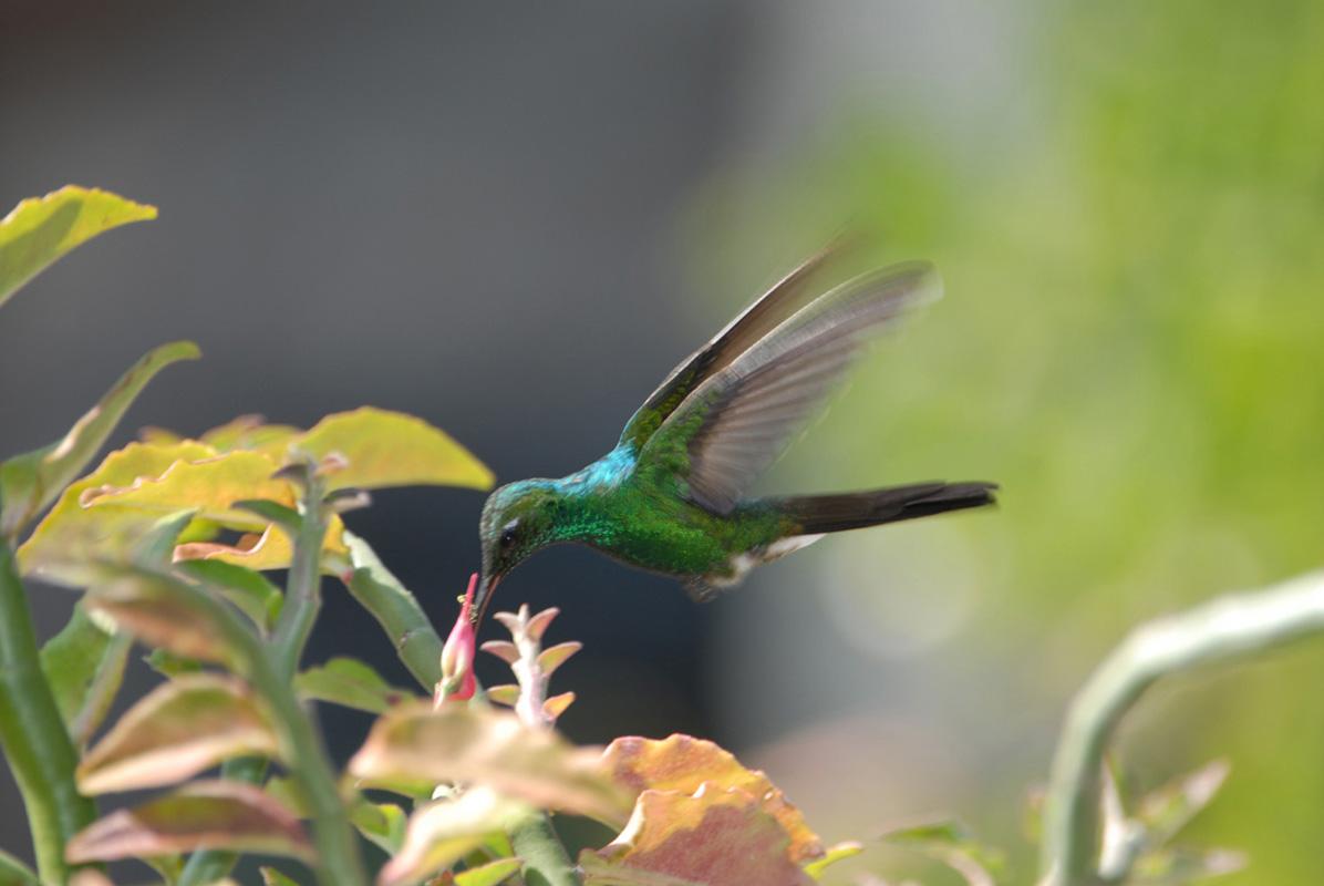 2007-KUBA-Trinidad092