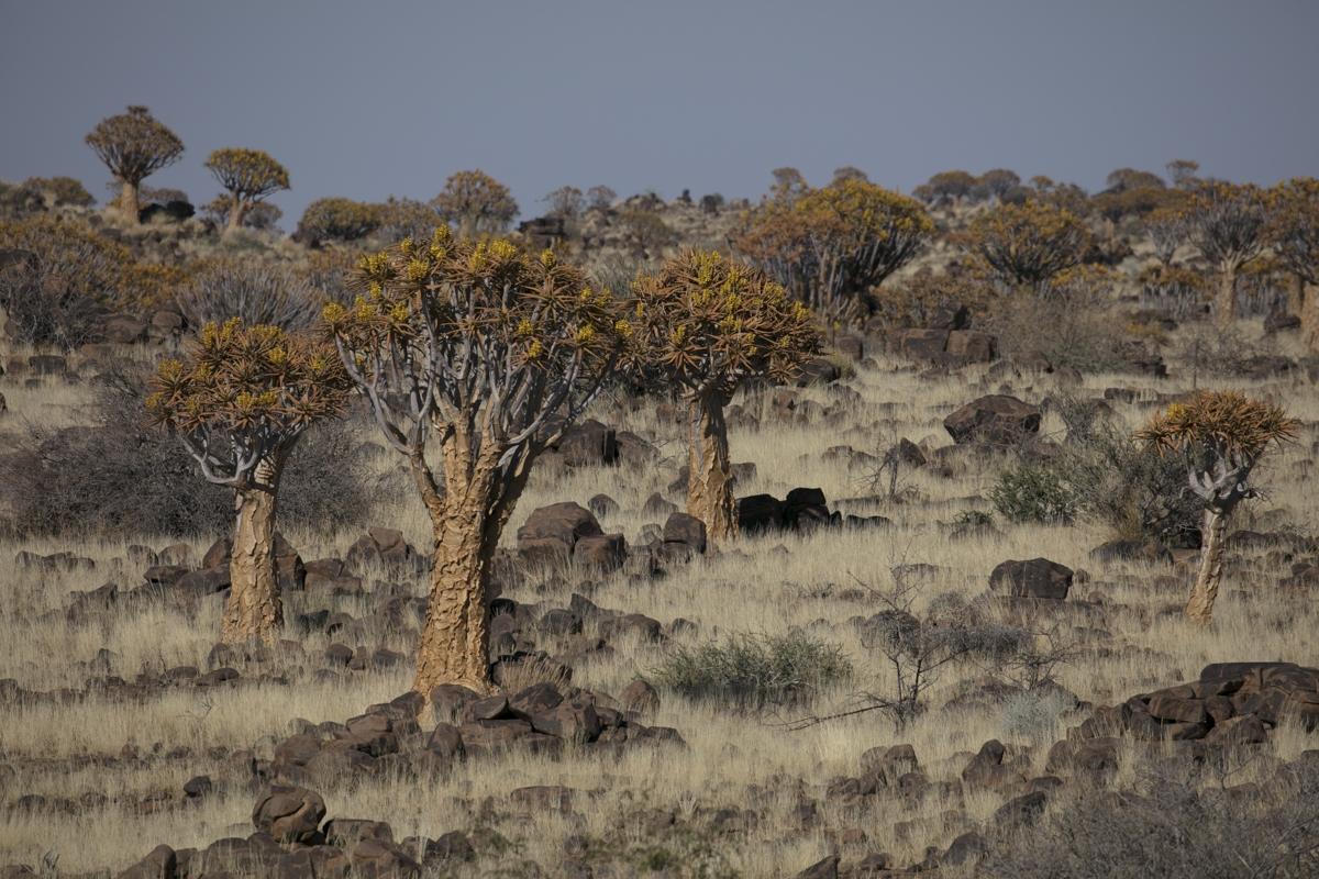 Fotosafari-in-namibia